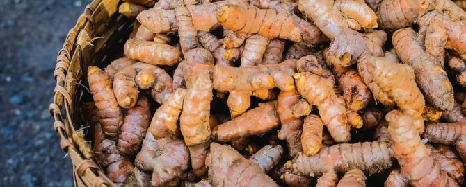 28 recipes around different ways of consuming Raw Turmeric